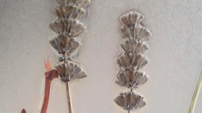 Herbarium / Kunst som knopskyder