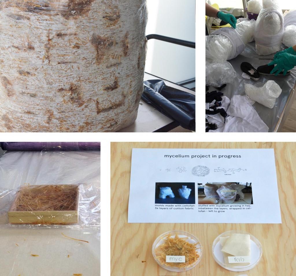 mycelium-_studentswork